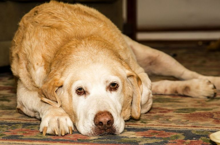 Микоплазмоз у собак что это такое