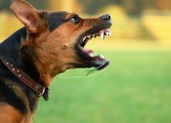 Пес проявляет агрессию