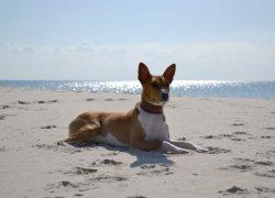 Красивая собака на фоне моря