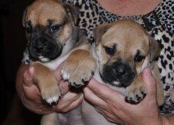 Милые щенки на руках