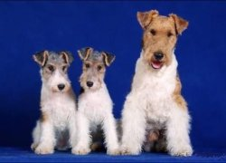 Взрослый пес со щенками
