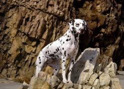 Пятнистый красавец на камне