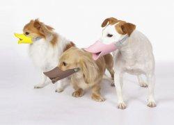 Модели для маленьких собак