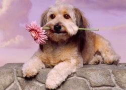 Красивый песик с цветком