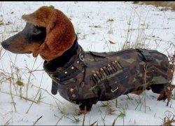 Пес в зимнем обмундировании