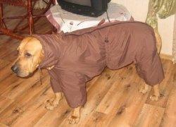 Собака в коричневом комбинезоне