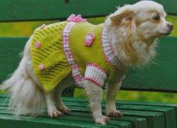 Свитер-платье для собачки