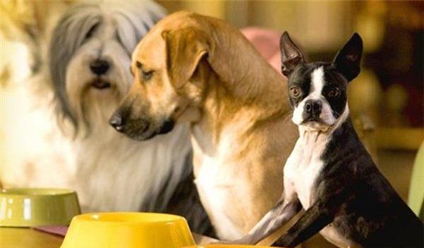 Собаки у желтых мисок