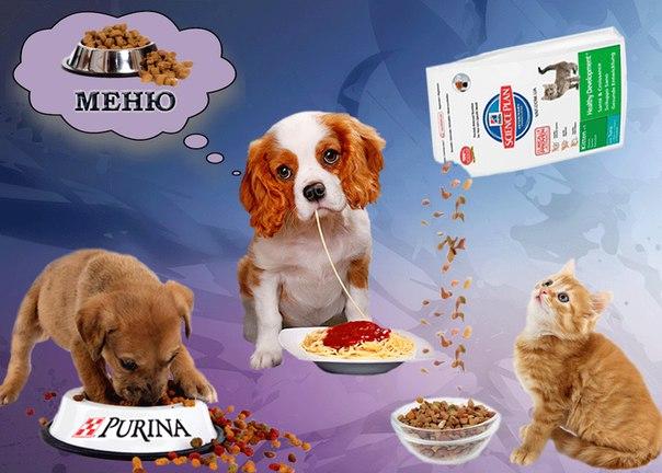 Корм для собак Purina