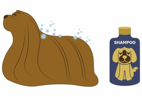 Собака и шампунь