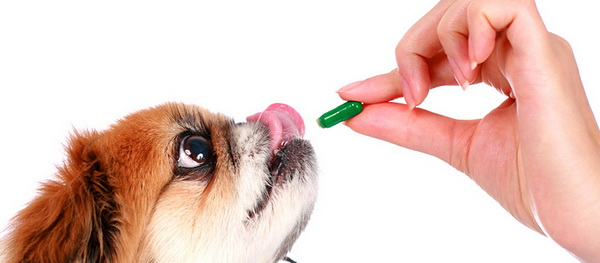 Собака хочет витаминку