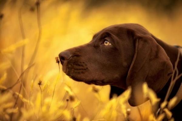Собака нюхает цветок