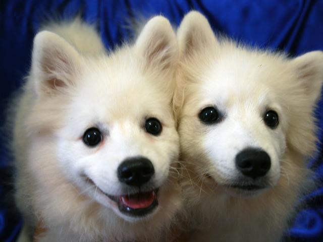 Счастливые собаки