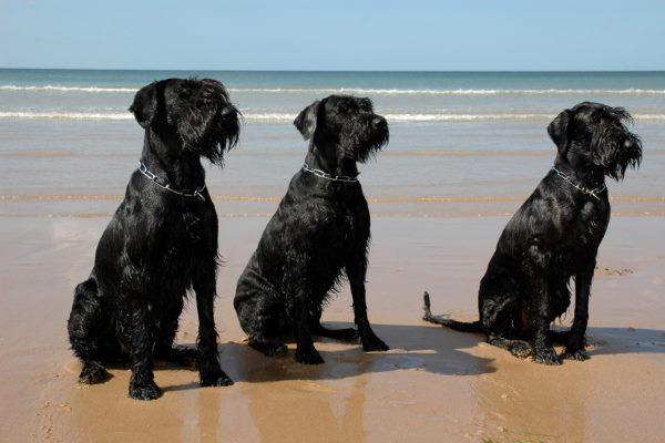 Три собаки возле моря