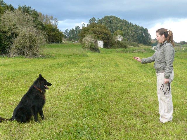 Обучение собаки простым командам