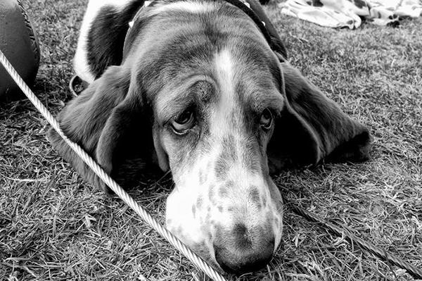 Грустная болеющая собака