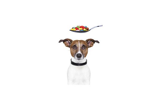 Собака смотрит на ложку с таблетками