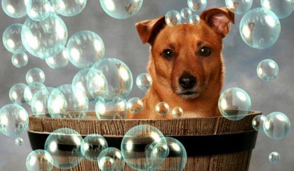 Пес в бочке для купания