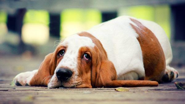 Пес лежит на асфальте