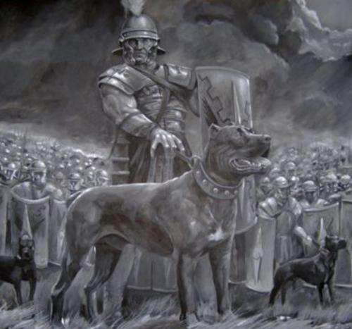 Бордоский дог в средневековье