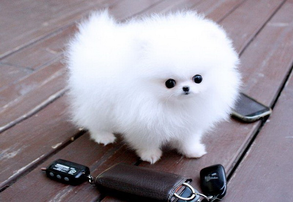 Маленький щенок-снежинка