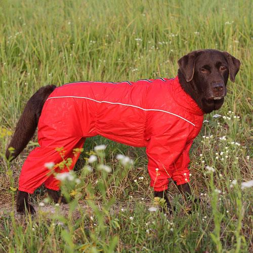 Собака в красном комбинезоне