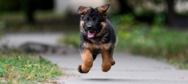 Маленький щенок на улице