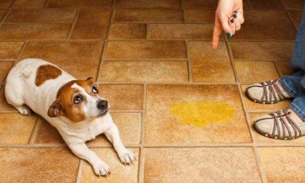 Собака и лужа