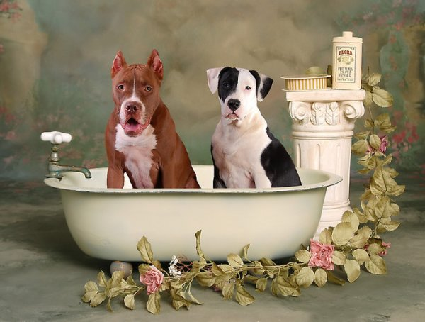 Два песика в ванне