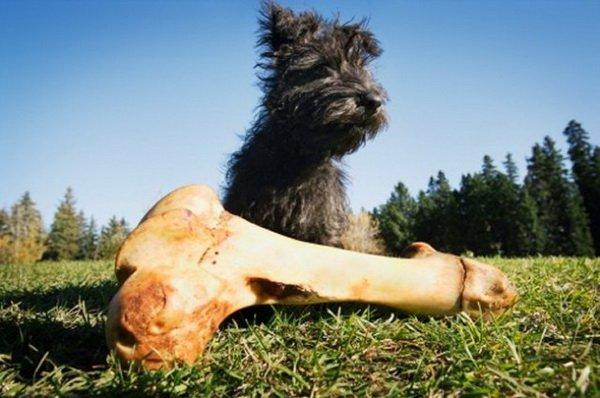 Собака и кость на улице