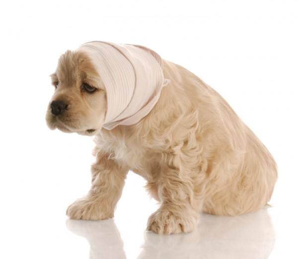 Больной щенок в шарфе