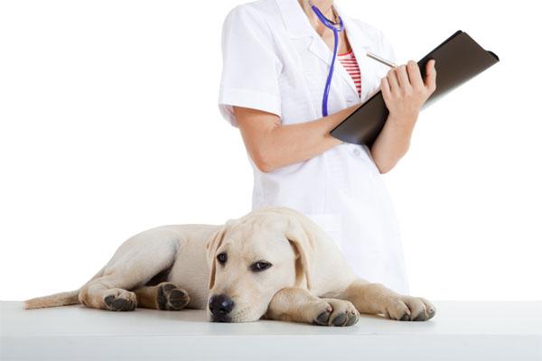 Собака и врач