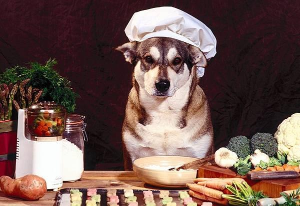 Собака-повар за столом
