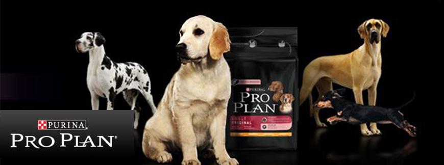 Собаки и корм Purina