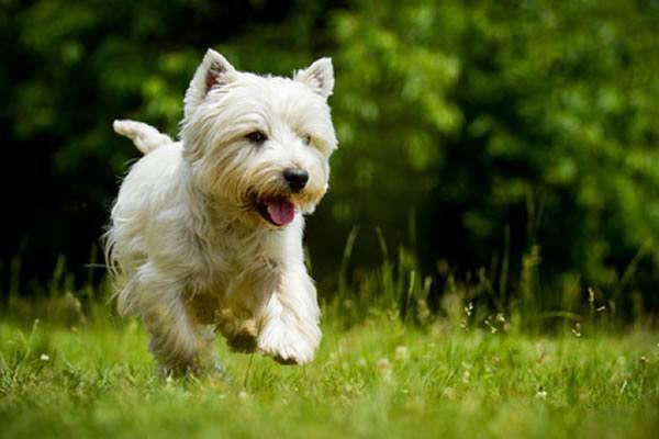Животное бежит по траве