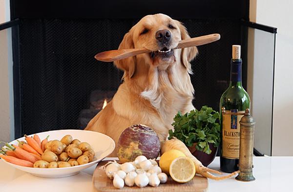 Собака и много еды