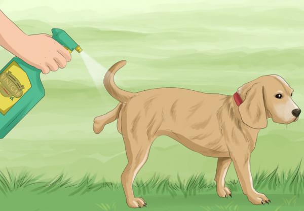 Собака и отпугивающий спрей