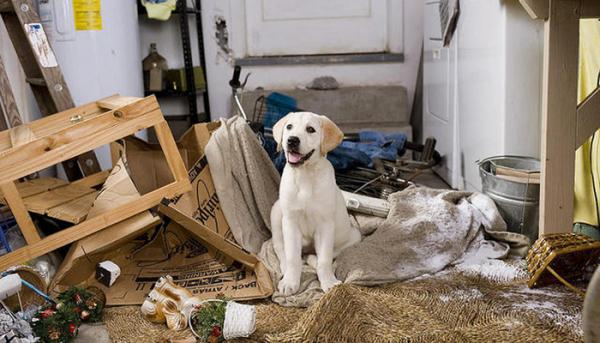 Собака и последствия грызни