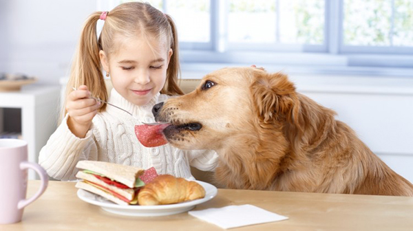 Девочка кормит питоомца из своей тарелки