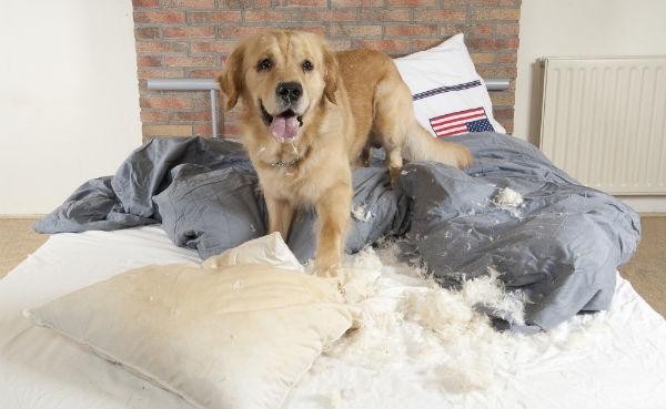 Собака портит вещи