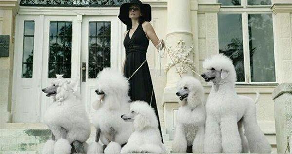 Много белых псов