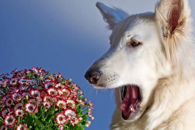 Собака и букет цветов