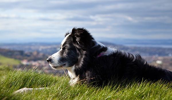 Пейзаж с пожилой собакой