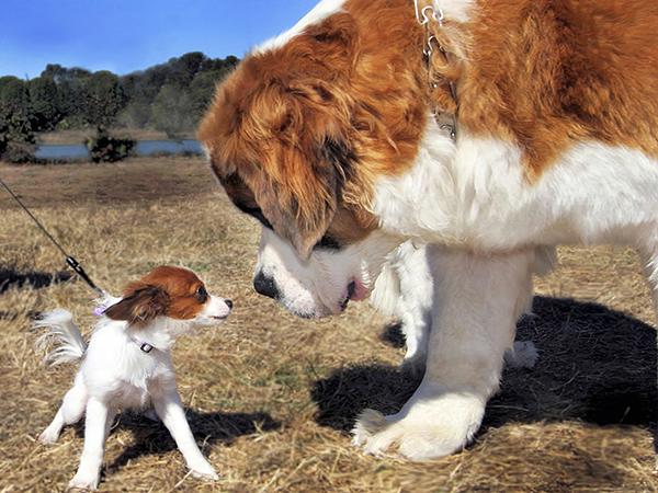 Большая и маленькая собака