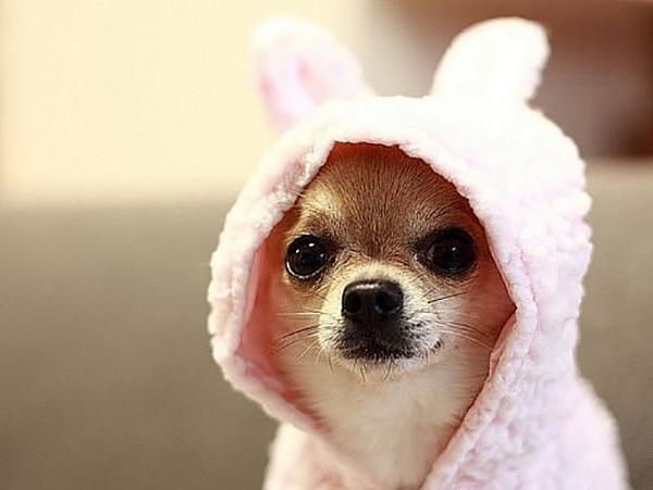 Собака в розовом капюшоне