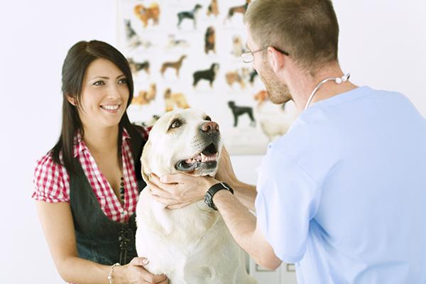 Хозяйка и собака у ветеринара