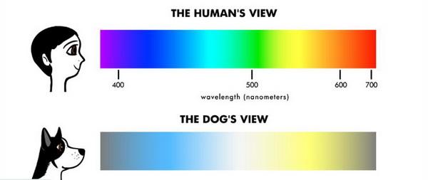 Как собака видит цвета