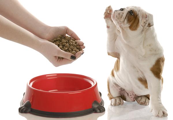 Собака и красная миска