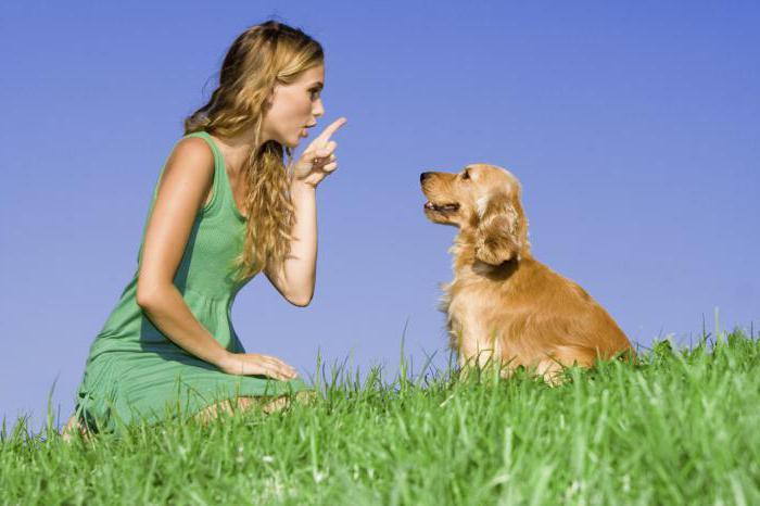 Хозяйка воспитывает собаку