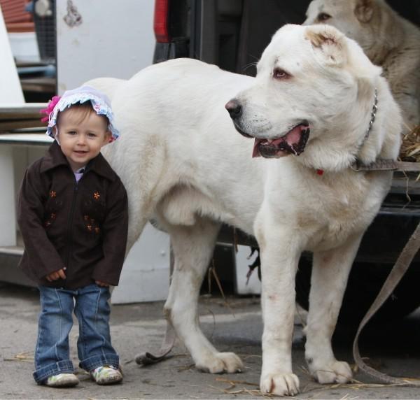 Овчарка с девочкой